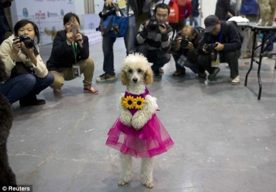 More and more people in China are becoming dog-owners