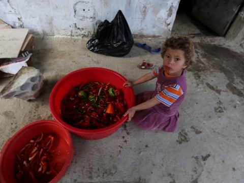 Syria: Warning of 'humanitarian disaster' as refugees struggle in sub-zero temperatures
