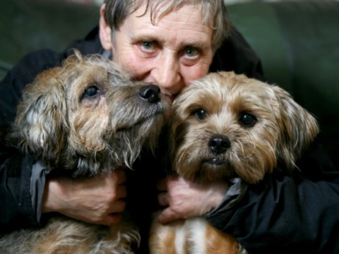 'Noisy' dogs in Yorkshire animal sanctuary face death after complaint