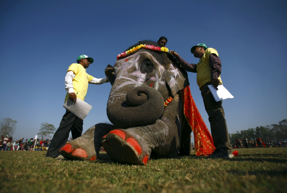 Peanuts not world peace on agenda at elephant beauty contest