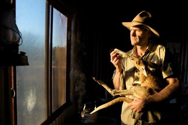 Chris Barns feeds an orphaned joey at his kangaroo sanctuary in Australia