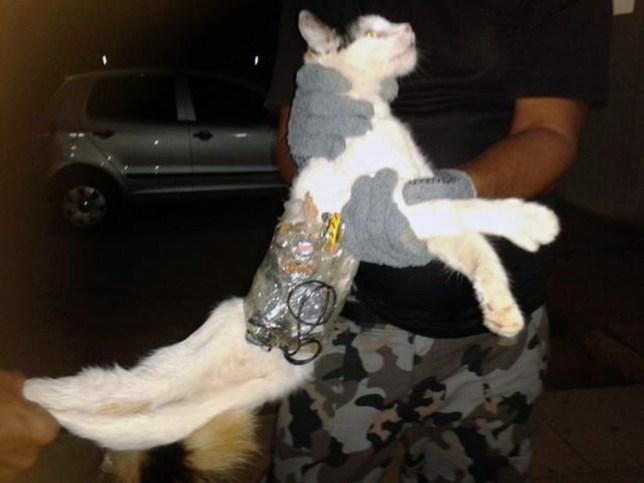 cat prison break, Brazil