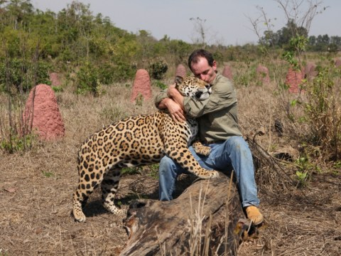 Jaguars – Born Free was a Hollywood movie-in-waiting
