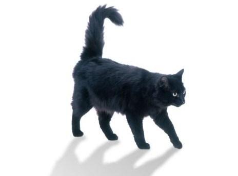 Top Pet Buys – Cat Grass