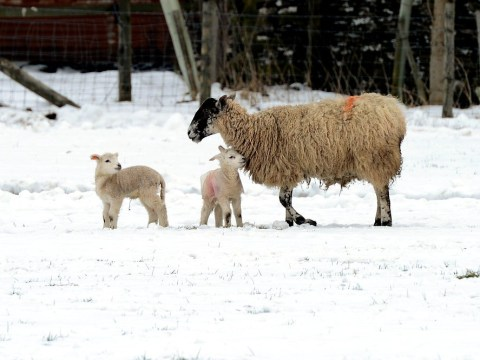 Coldest Easter Sunday on record as temperature falls to -12.5C