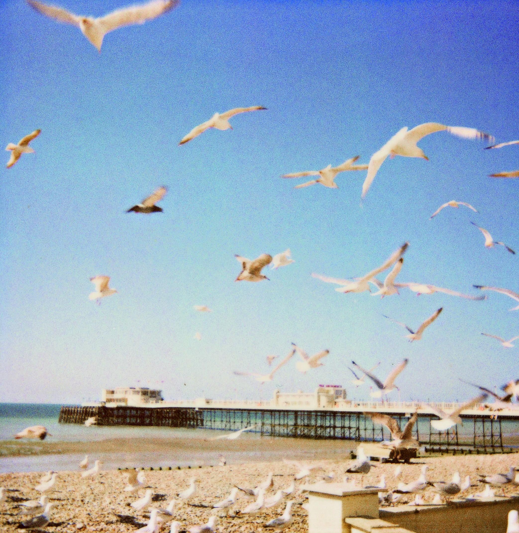 Forget Instagram, photographer uses 70s Polaroid camera for nostalgic seaside snaps