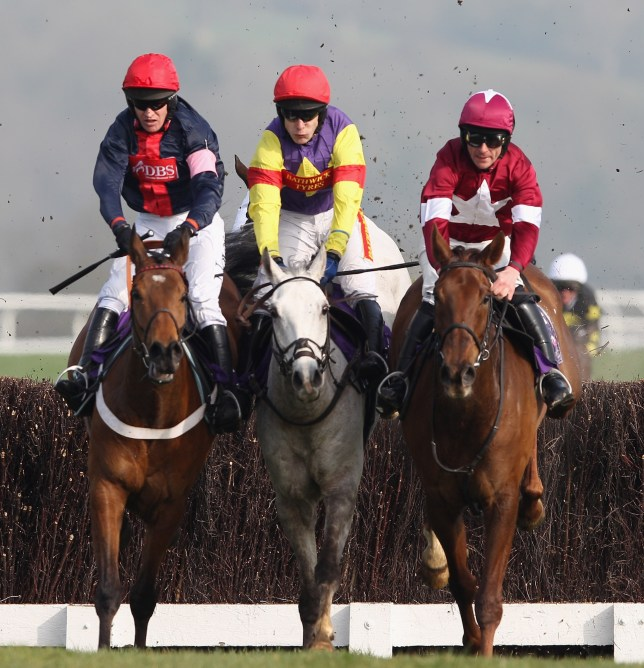 FILE: Grands Crus has been ruled out of next week's Cheltenham Festival