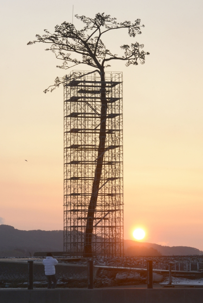 """An artificially-restored """"miracle pine tree,"""" that survived the March 11, 2011 tsunami, is silhouetted against the rising sun in Rikuzentakata, Iwate prefecture, Japan, Monday, March 11, 2013. Japan marked the second anniversary of its earthquake, tsunami and nuclear catastrophe, that killed nearly 19, 000 people in areas along Japan's northeastern coast. The 27-meter (88-foot and 7-inch)-tall tree, a single survivor among 70,000 trees in a forest along the coast, has just been restored in a project to preserve it. (AP Photo/Kyodo News)  JAPAN OUT,  MANDATORY CREDIT, NO LICENSING IN CHINA, HONG KONG, JAPAN, SOUTH KOREA AND FRANCE"""