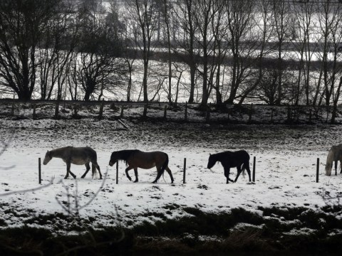 Snow grips Britain as bookies slash odds of a white Easter