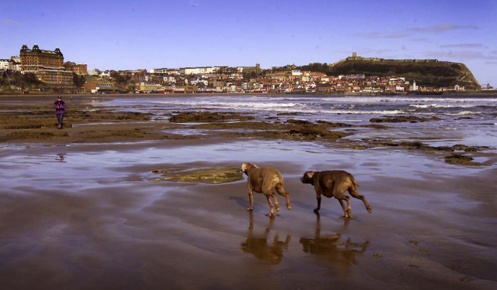 Good beaches ruined by last year's summer rains