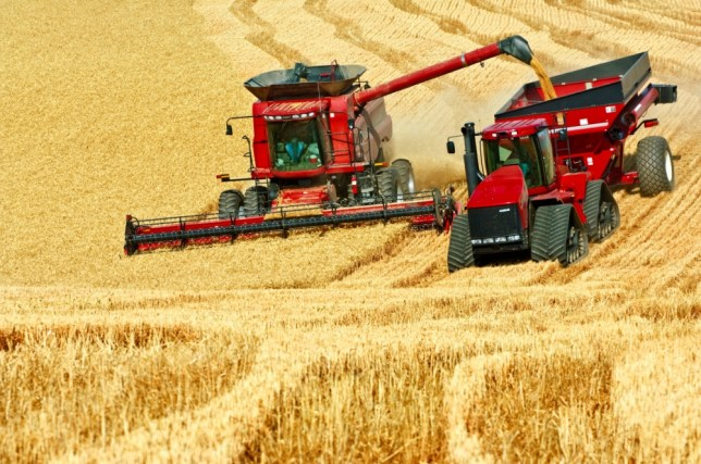 A Case IH combine harvests wheat while unloading on-the-go into a grain cart pulled by a tracked tractor in Washington, USA.     BYRC8K