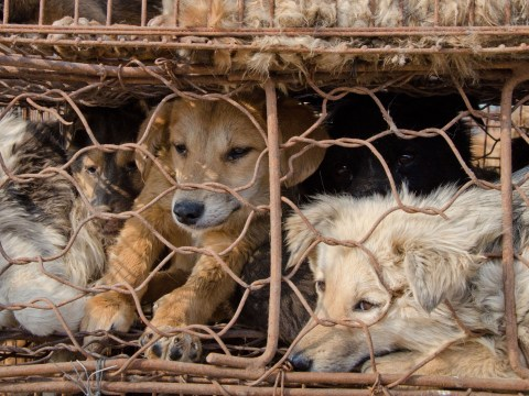 Dogs beaten and stabbed to death for meat and fur