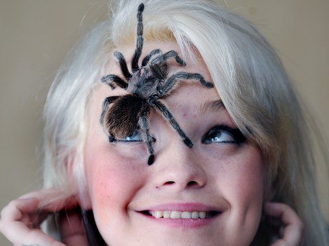 Arachnophobe fights fear of spiders by getting pet tarantula – and treating it to host of creature comforts