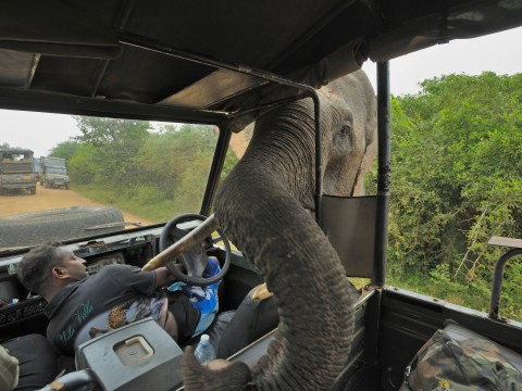 Ambushed by Friar Tusk: Elephant helped by monks is forest thief