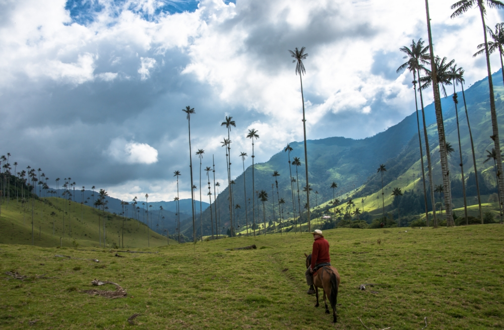 The Cocora Valley in Colombia