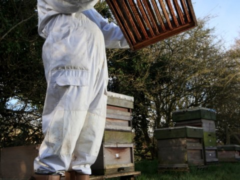 Bee population at 'crisis point' as numbers hit by bad weather in UK