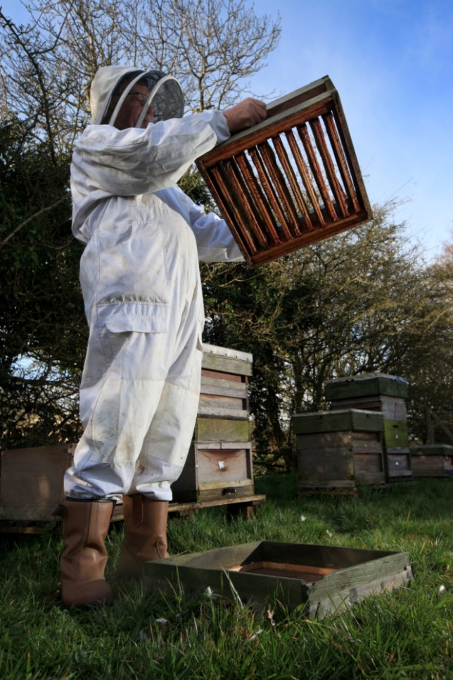 Tony Maggs bee population problems