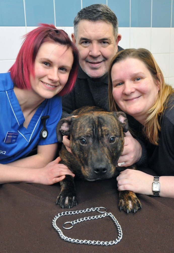 Undated PDSA handout photo of PDSA vet Mary Tonge with Buster the Staffordhsire Bull terrier puppy and his owners Jackie Stephenson and Des Connor after the puppy ate his lead. PRESS ASSOCIATION Photo. Issue date: Monday April 29, 2013. Buster the Staffordhsire Bull terrier puppy needed emergency surgery after swallowing a two-foot long metal lead, his owners have said. The playful nine-month-old ate his chain after grabbing it while Des Connor was on the phone. See PA story ANIMALS Chain. Photo credit should read: Ian McClelland/PDSA/PA Wire NOTE TO EDITORS: This handout photo may only be used in for editorial reporting purposes for the contemporaneous illustration of events, things or the people in the image or facts mentioned in the caption. Reuse of the picture may require further permission from the copyright holder.