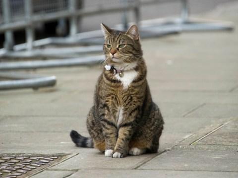 George Osborne's cat Freya gets cheap collar in latest budget cut