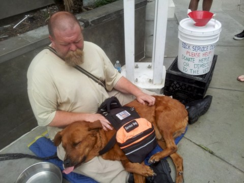 Homeless man's sick dog saved by public as pair find new home