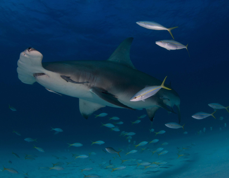 Spectacular underwater photos