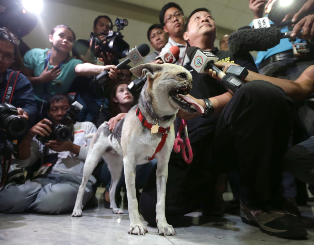 Hero dog who lost her snout comes home