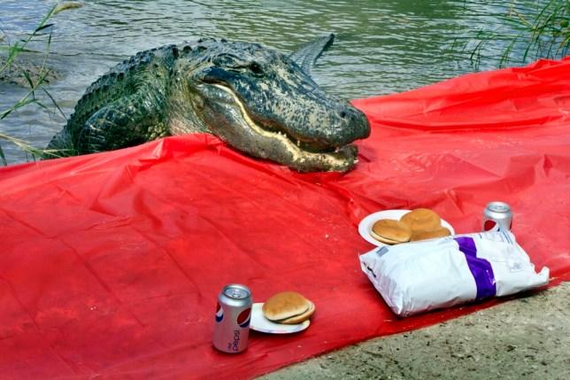 Hungry alligator gatecrashes riverside picnic in Florida