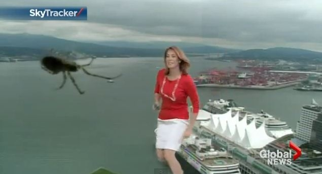 Weather girl freaks out as massive spider appears on screen behind her
