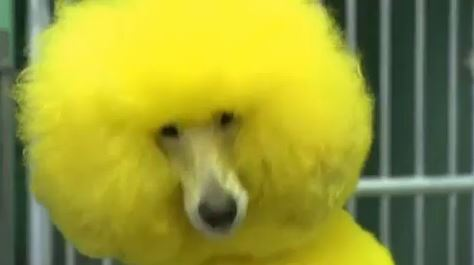 VIDEO: Your dog looks a right muppet