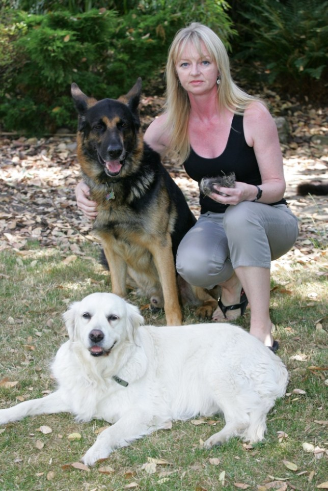A STUNNED mum was fined £50 for littering ¿ after she brushed her dogs¿ hair in a park...Tracey Hayes, 46, of Gidea Park, Romford, Essex, was slapped with the on-the-spot penalty after two council wardens swooped on her...She was told she was had committed an offence after the jobsworths spotted her brushing her golden retriever, Biskit, and German shepherd, Rocky, in Harrow Lodge Park, Hornchurch, on Wednesday (Jul 17)...Angry Mrs Hayes said: ¿It seems a little crazy to me when you see the amount of litter in the park...¿I always leave the dogs¿ hair out in my garden for the birds and I haven¿t met a single person to say anything against it.¿..Tracey with her pets Rocky and Biskit.