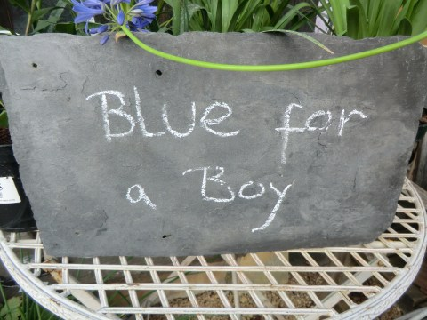 Celebrating the royal baby: 5 blue flowers for a baby boy