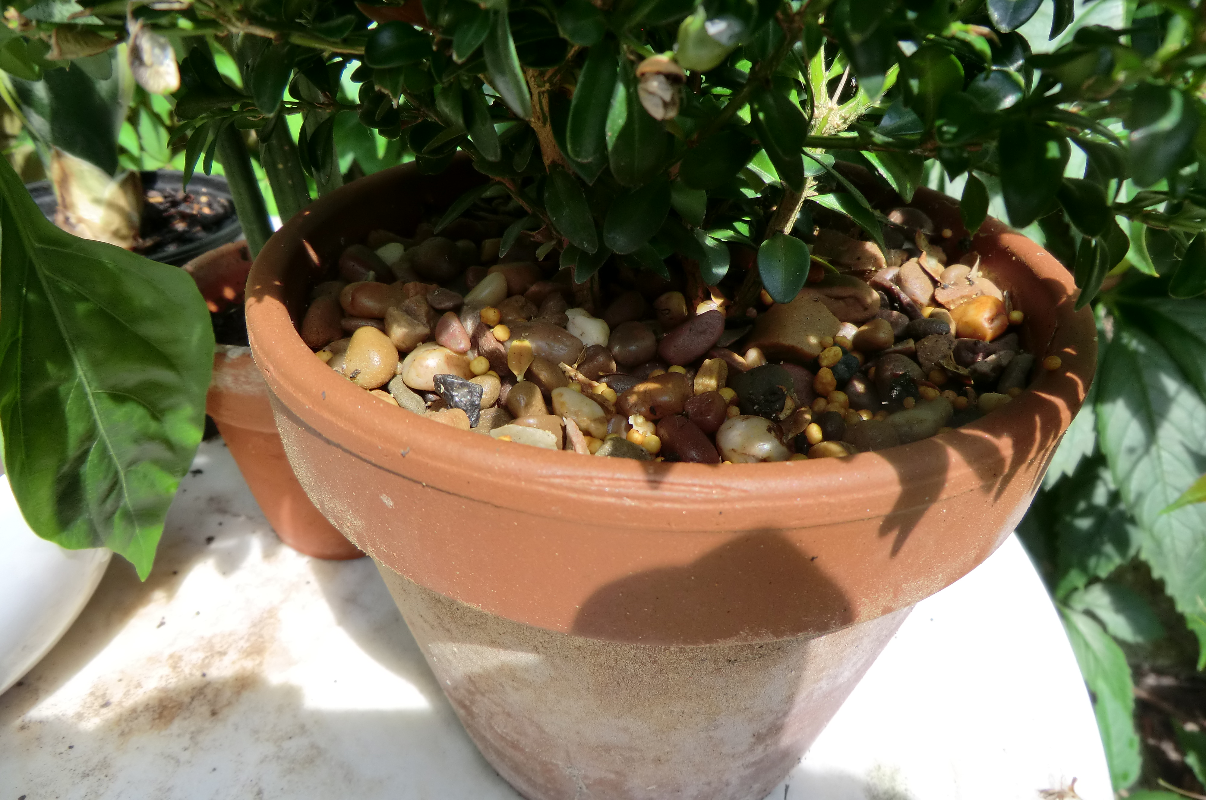 Rain in the UK: 5 ways to prepare your garden for the next heatwave
