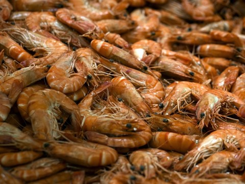 Prawn shortage means shoppers are shelling out more