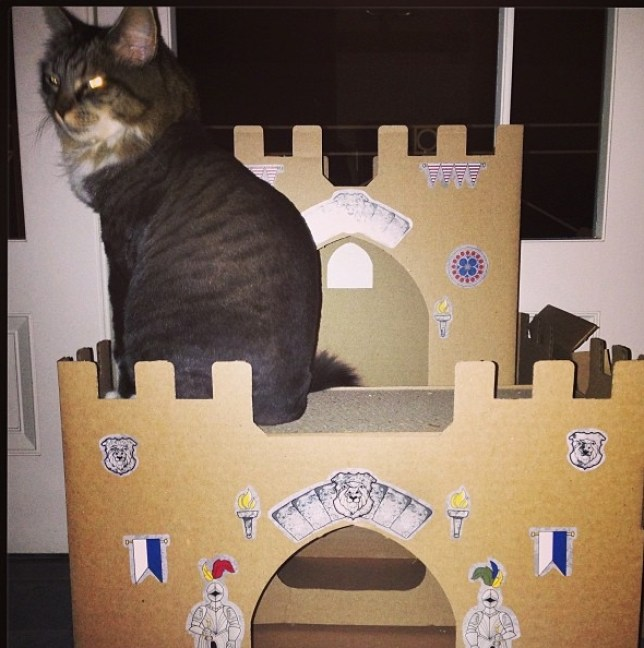 Kitty of the castle: Katy Perry shared a snap of her cat on Instagram (Photo: Katy Perry Instagram)