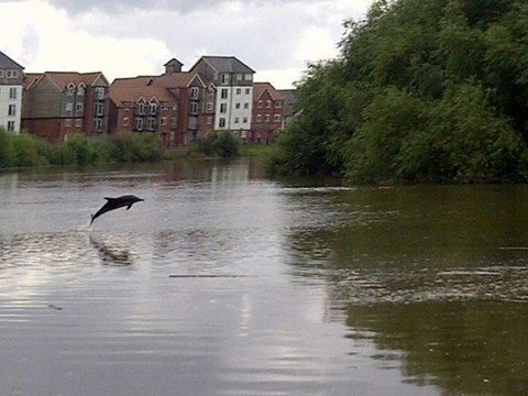 Davina the dolphin taken back out to sea after swimming up River Dee into Chester city centre