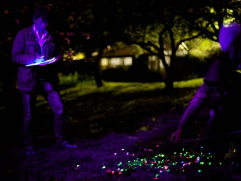 On the trail of glowing snails: Secret life of garden pest proves to be, well, very slow but illuminating