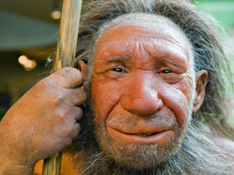 Stone age man used garlic mustard to spice up their cuisine