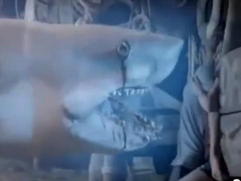 Ghost Shark wins inevitable Sharknado comparisons after Syfy debut