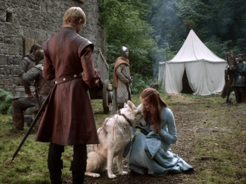Game Of Thrones Sansa Stark actress adopted her real-life direwolf