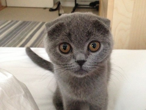 A day in the life of London's cutest cat