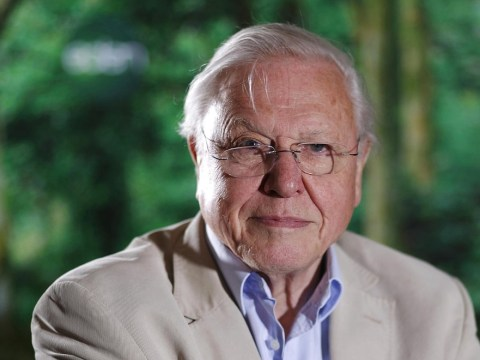 Sir David Attenborough says humans 'heading for disaster' if population not controlled