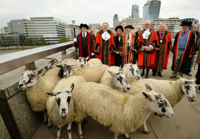Sheep, London Bridge