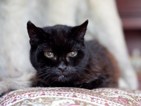 World's oldest cat Cola prepares to celebrate 28th birthday (that's 140 in cat years)