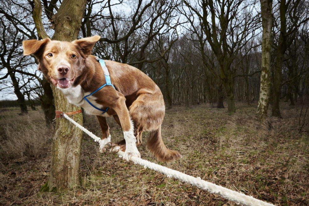 Tightrope-walking dog and man with 322 vacuum cleaners lead Brits in 2014 Guinness World Records