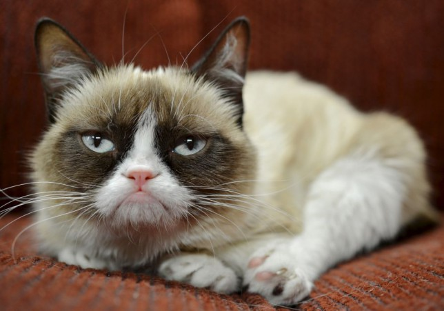 Grumpy Cat becomes new face of Friskies cat food