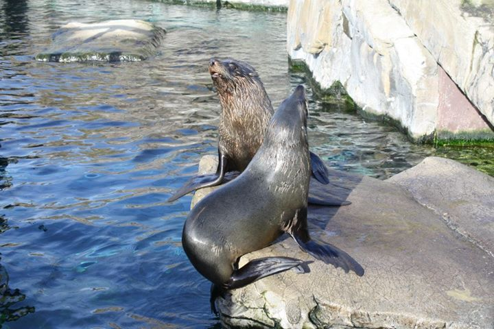 Zoo keeper accused of punching a seal returns to work after investigation