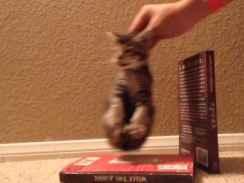 Miley Cyrus' Wrecking Ball video recreated with disinterested kitten