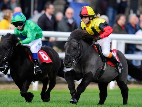 Gallery: Shetland Pony Gold Cup at Plumpton racecourse 2013