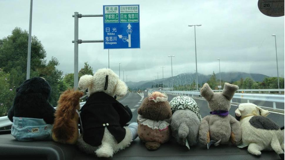 Stuffed animals, tour