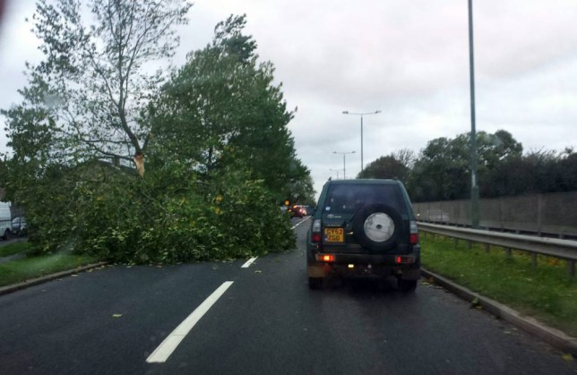 A fallen tree blocks the A12 at Newbury Park in London this morning (Picture: Sean Dempsey/PA)